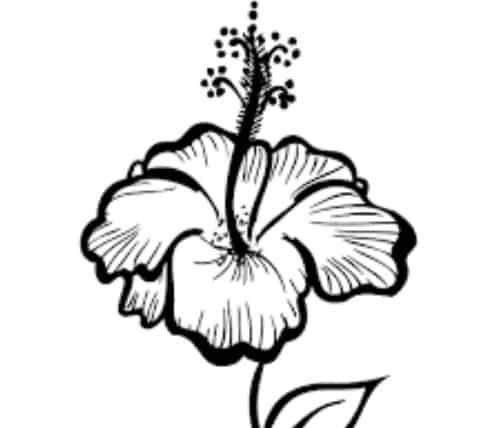 Sketsa Bunga Sepatu Hitam Putih