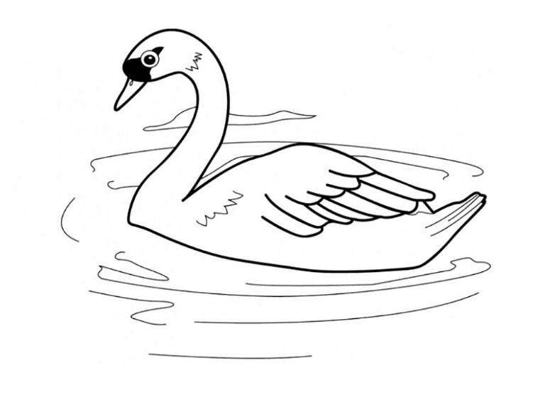 Sketsa Burung Angsa