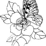 Sketsa Daun Bunga Sepatu