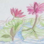 Sketsa Gambar Bunga Kamboja Merah