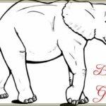 Sketsa Gambar Gajah Yang Mudah
