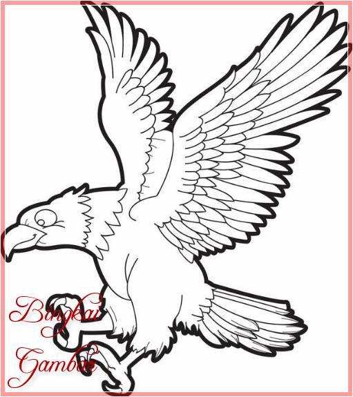 Sketsa Gambar Hewan Burung Elang Terbaru