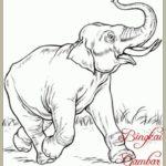 Sketsa Gambar Hewan Gajah
