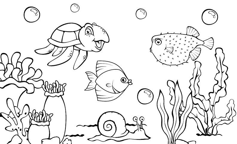 54+ Gambar Alam Laut Kekinian