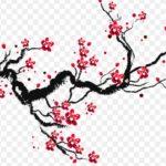 Sketsa Gambar Pemandangan Bunga Sakura