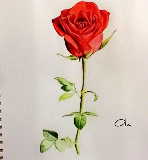 Sketsa Gambar Pohon Bunga Mawar