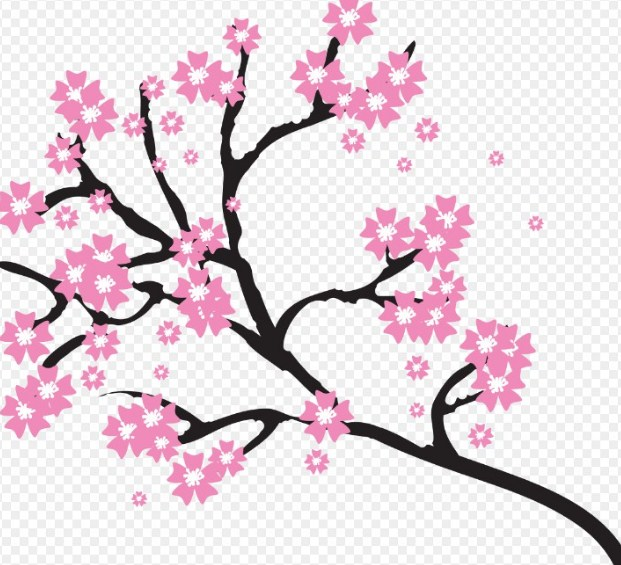 Sketsa Gambar Pohon Bunga Sakura