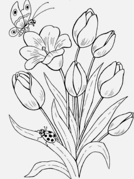 Sketsa Gambar Taman Bunga Tulip