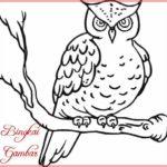 Sketsa Hewan Burung Hantu Terbaru