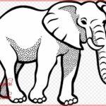 Sketsa Hewan Gajah Terbaru