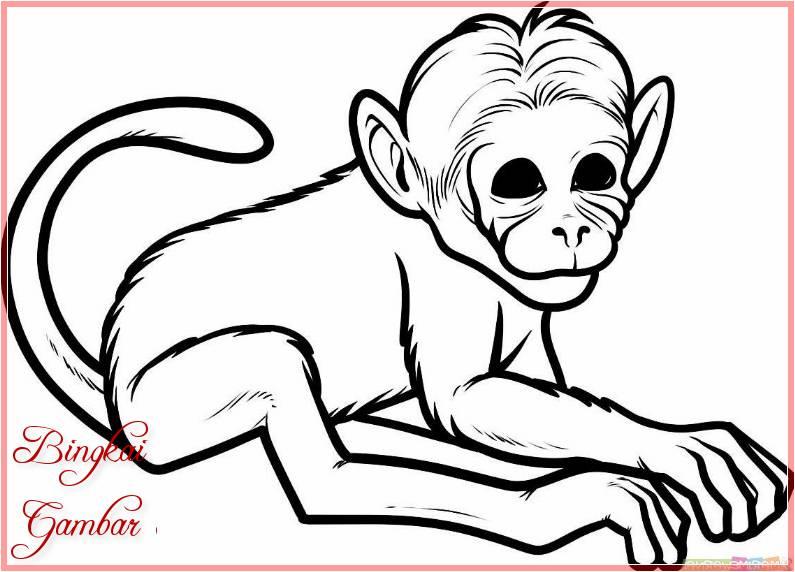 Sketsa Hewan Monyet Terbaru