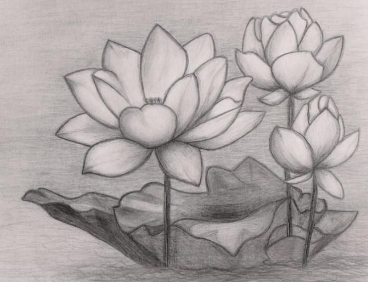 Sketsa Lukisan Bunga Anggrek