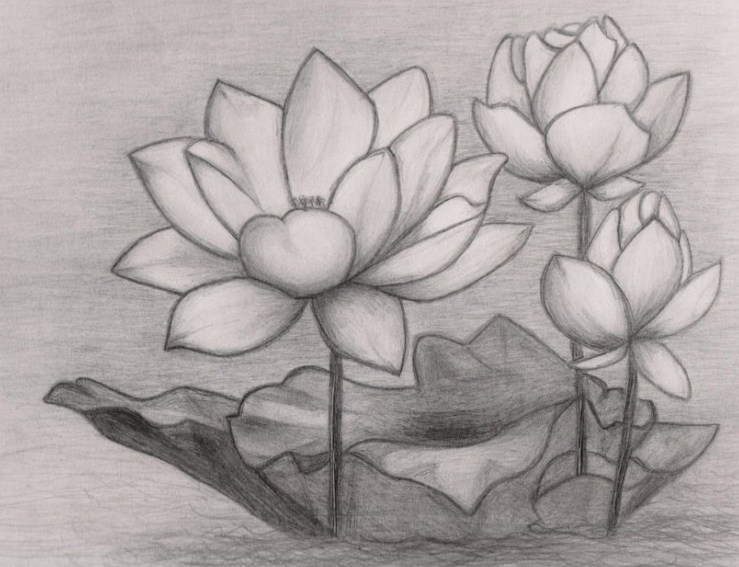 10 Gambar Sketsa Bunga Anggrek Terlengkap Simple Dan Sederhana