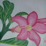 Sketsa Lukisan Bunga Kamboja