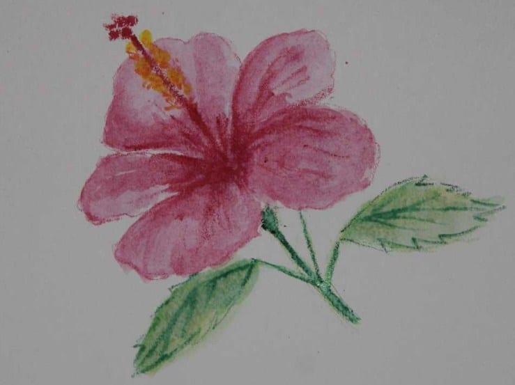 Sketsa Lukisan Bunga Kembang Sepatu