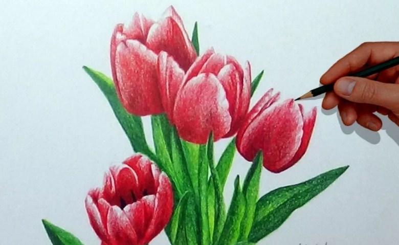 10 gambar sketsa bunga tulip sederhana warna dan 3d