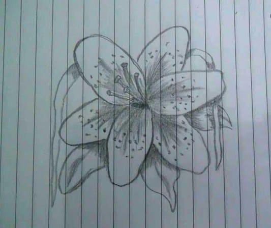 Sketsa Menggambar Bunga Sepatu