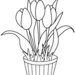 Sketsa Menggambar Bunga Tulip