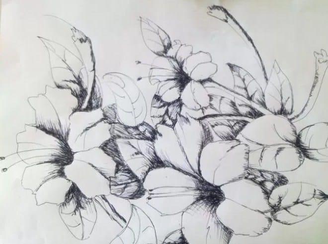 Sketsa Motif Bunga Sepatu