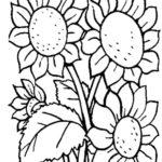 contoh sketsa bunga matahari