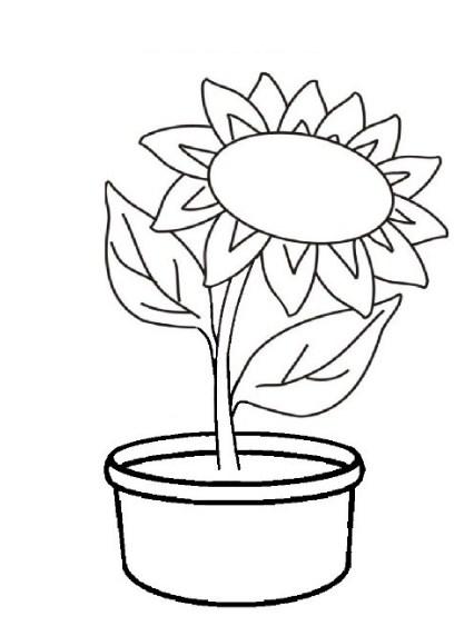sketsa bunga matahari dalam pot
