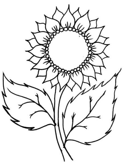 sketsa bunga matahari dengan pensil