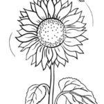 sketsa bunga matahari sederhana