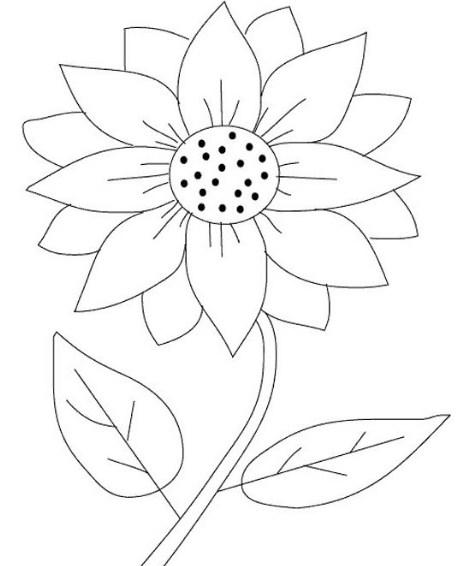 sketsa bunga matahari