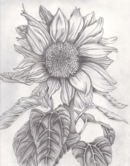 sketsa motif bunga matahari