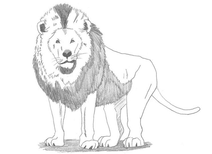 Gambar Sketsa Hewan Singa