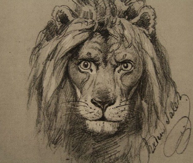 Gambar Sketsa Muka Singa