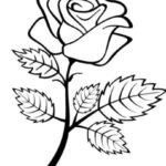 Gambar Sketsa Sederhana Bunga Mawar