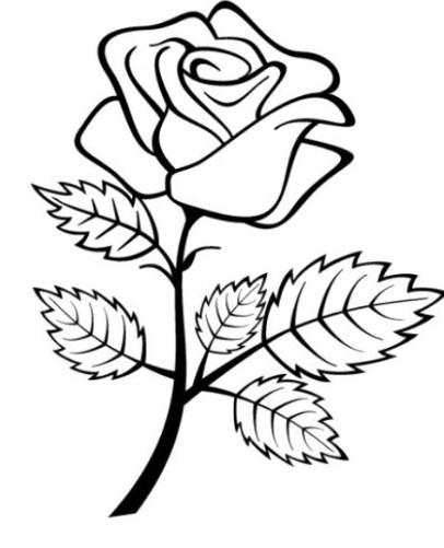 Gambar Sketsa Sederhana Bunga Mawar Bingkaigambar Com