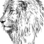Gambar Sketsa Singa Arema