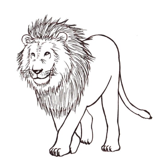 Sketsa Gambar Binatang Singa