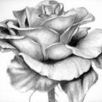 Contoh Sketsa Lukisan Bunga Mawar