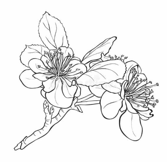 Foto Sketsa Lukisan Bunga