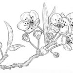 Sketsa Lukisan Bunga Sederhana