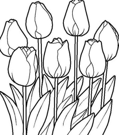 Sketsa Lukisan Bunga Tulip