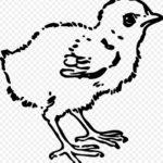 Gambar Sketsa Anak Ayam