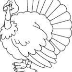 Gambar Sketsa Ayam Kalkun