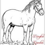Gambar Sketsa Binatang Kuda