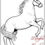 Gambar Sketsa Fauna Kuda