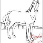 Gambar Sketsa Hewan Kuda