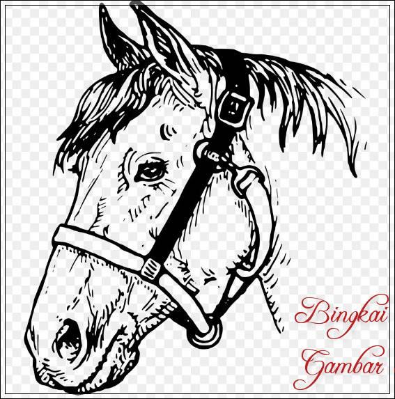 Gambar Sketsa Kepala Kuda