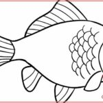 Contoh Gambar Sketsa Ikan Yang Mudah