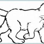 Contoh Gambar Sketsa Kucing