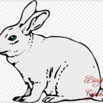 Gambar Sketsa Fauna Kelinci