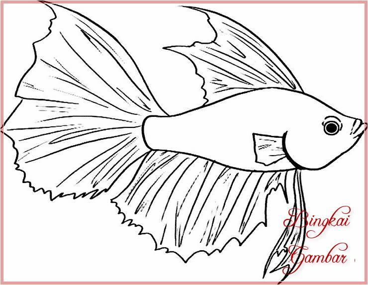 Gambar Sketsa Ikan Cupang Bingkaigambarcom