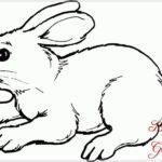 Gambar Sketsa Kelinci Pensil